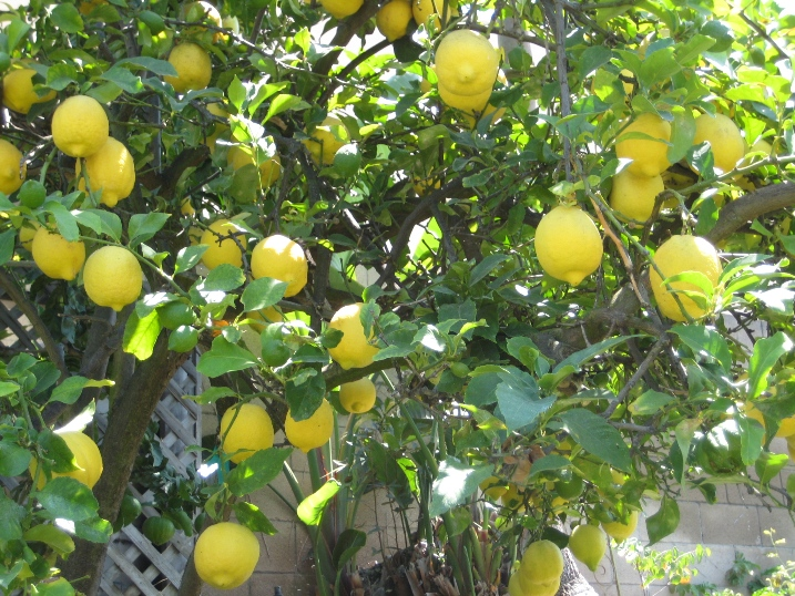Post image for GASP! Too Many Lemons??